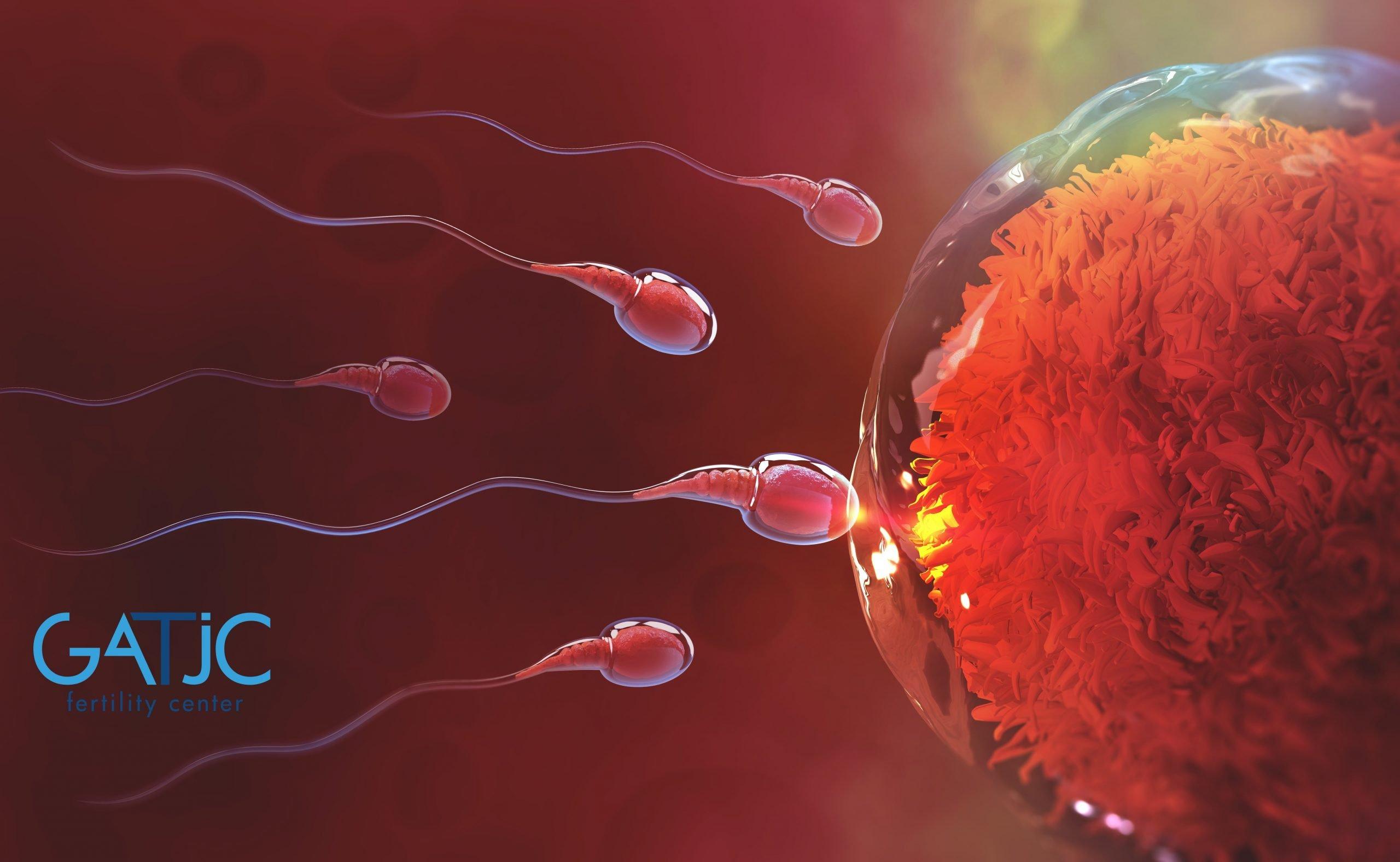 spermatozoi scaled